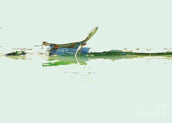 Turtle Art Print featuring the photograph Basking In The Sun by Joy Bradley
