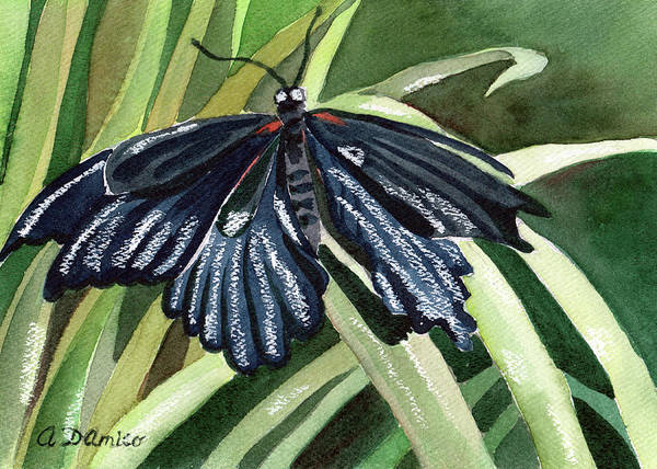 Butterfly Art Print featuring the painting Black Butterfly by Anna D'Amico