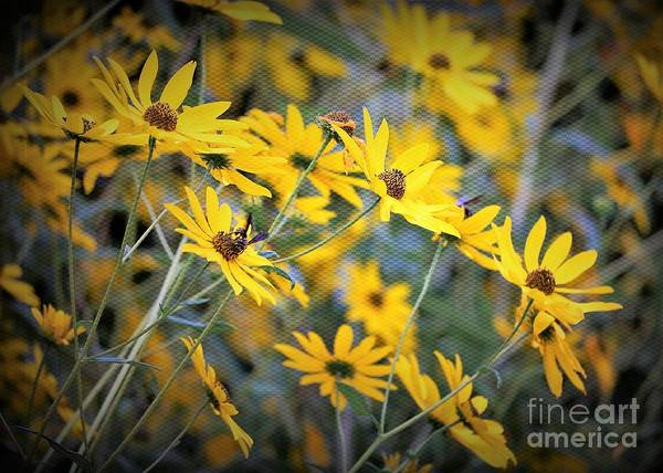 Blackeyed_susan Art Print featuring the photograph Black-eyed Susan Texturized by Diann Fisher