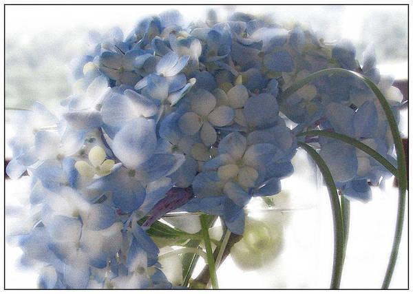 Hydrangea Art Print featuring the photograph Blue Hydrangea by Wendy Fike