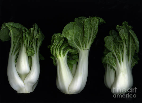 Slanec Print featuring the photograph Bok Choy by Christian Slanec