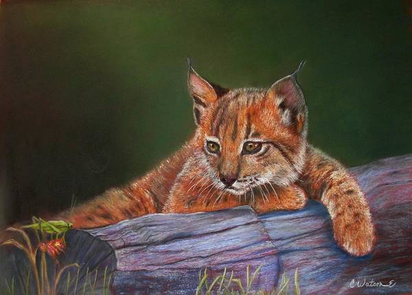 Iberian Lynx Art Print featuring the painting Brisa by Ceci Watson