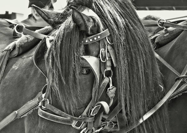 Horse Art Print featuring the photograph Carriage Horse Beauty by JAMART Photography