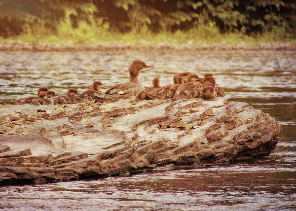 Bird Art Print featuring the photograph Crossing The River by JAMART Photography