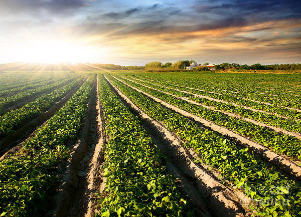 Agricultural Art Print featuring the photograph Cultivated Land by Carlos Caetano