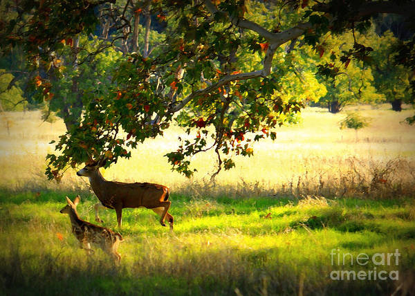 Deer Art Print featuring the photograph Deer In Autumn Meadow - Digital Painting by Carol Groenen