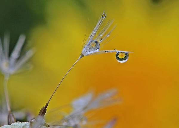 Dandelion Art Print featuring the photograph Dew Drop Dandelion by Scotty Alston