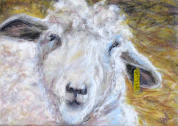 Sheep Art Print featuring the pastel Ear Tag by Wendie Thompson