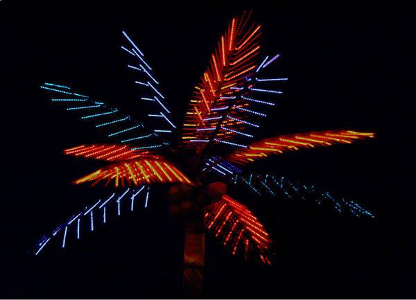 Neon Art Print featuring the photograph Ellas Neon Palm by David Houston