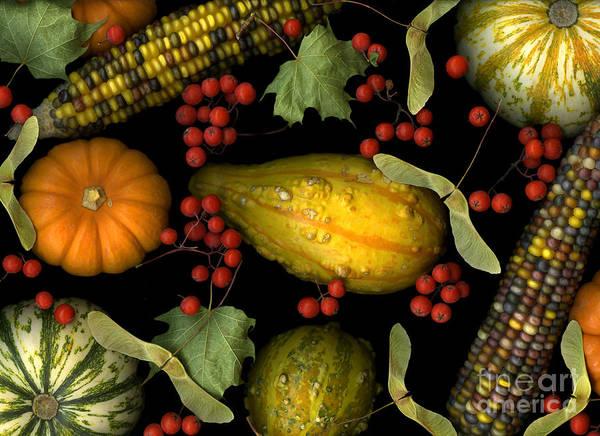 Slanec Art Print featuring the photograph Fall Harvest by Christian Slanec