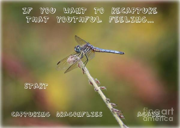 Dragonfly Art Art Print featuring the photograph Feel Young Again by Carol Groenen