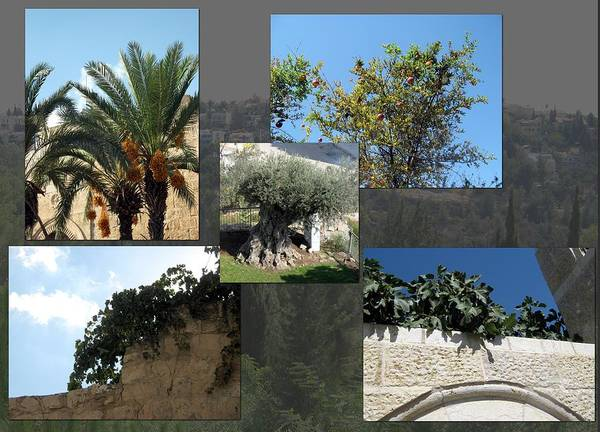 Fruit Art Print featuring the photograph Five Fruit Of Israel by Menucha Citron