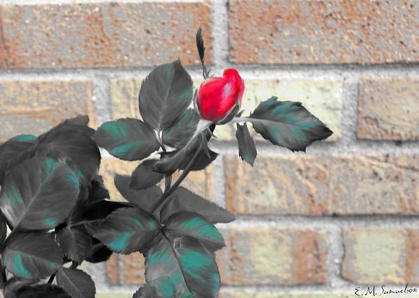 Rose Art Print featuring the photograph Flowers And Bricks by Elise Samuelson
