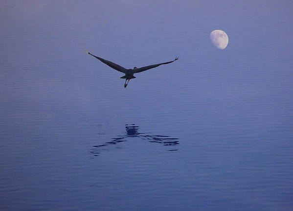 Nature Art Print featuring the photograph Fly To The Moon by Eric Workman