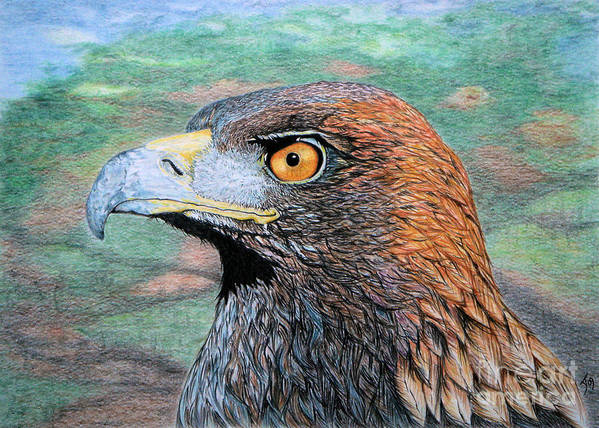 Golden Eagle Art Print featuring the drawing Golden Eagle by Yvonne Johnstone