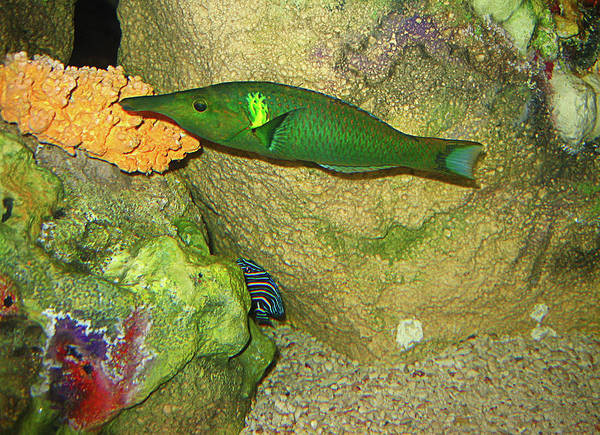 Fish Art Print featuring the photograph Green Fish by Denise Keegan Frawley