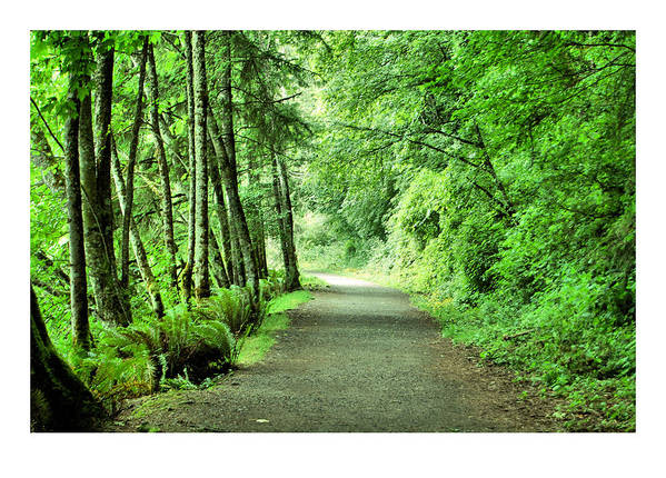 Green Art Print featuring the photograph Green Path by J D Banks
