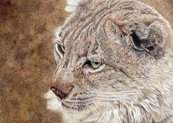Linx Art Print featuring the drawing Guardian by Joanne Stevens