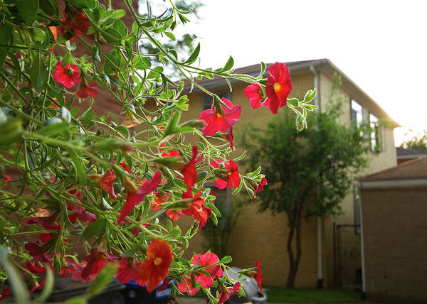 Hanging Basket Art Print featuring the photograph Hanging Basket by Tim Fitzwater