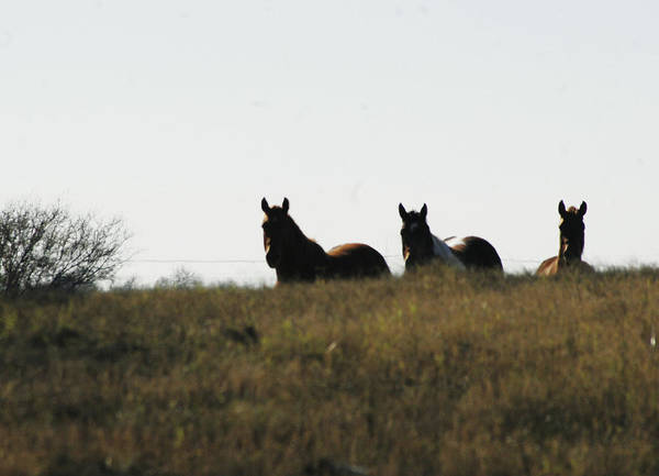 Landscape Art Print featuring the photograph Horses In The Field by Adrianne OConnor