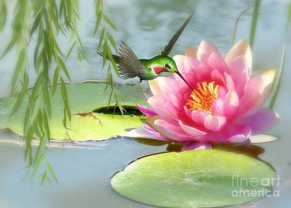 Hummingbird Art Print featuring the mixed media Hummingbird And Water Lily by Morag Bates
