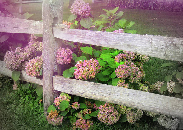 Flower Art Print featuring the photograph Hydrangeas by JAMART Photography