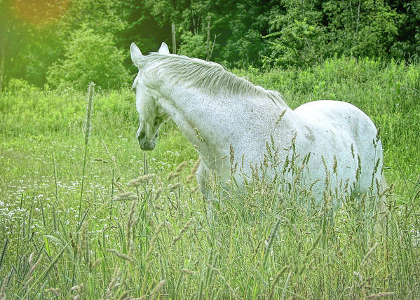Horse Art Print featuring the photograph In The Meadow by JAMART Photography