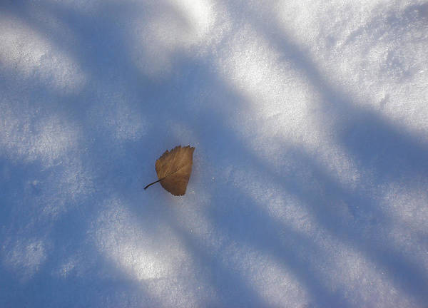 Nature Art Print featuring the photograph Leaf In Shadows by Marilynne Bull