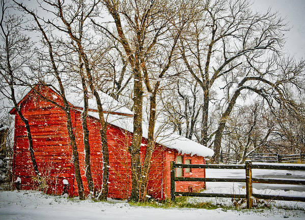 Americana Art Print featuring the photograph Loafing Shed by Marilyn Hunt