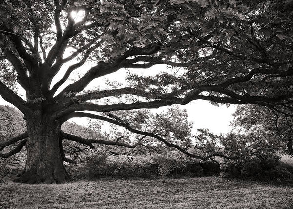 Tree Art Print featuring the photograph Mother Nature by Edward Myers