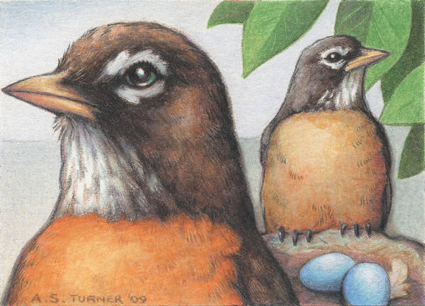 Birds Art Print featuring the drawing Mr And Mrs Robin Are Expecting by Amy S Turner