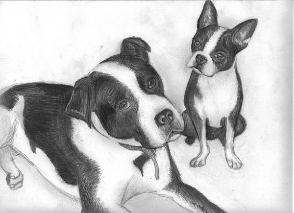 Dog Art Print featuring the drawing Ms Proutys Dogs by Katie Alfonsi