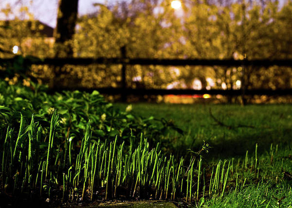 Fence Art Print featuring the photograph Night Yard by Tim Fitzwater