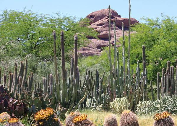 Desert Art Print featuring the photograph Phoenix Botanical Garden by Carol Groenen