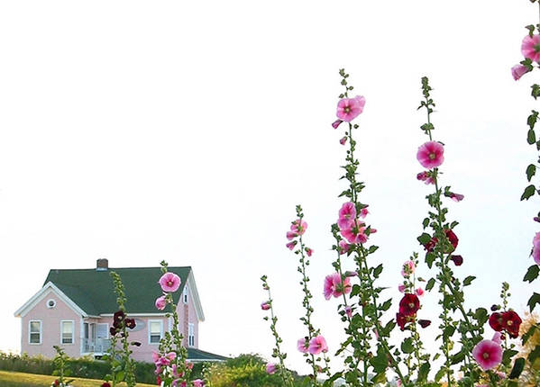 Island Art Print featuring the photograph Pink House by Gerard Yates