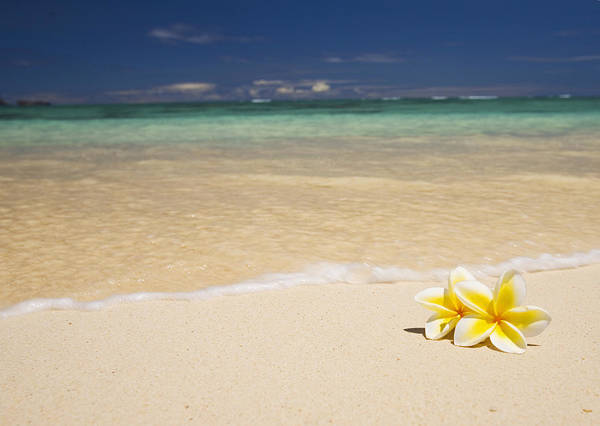 Afternoon Art Print featuring the photograph Plumeria Pair by Tomas del Amo - Printscapes