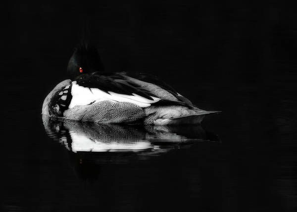 Loon Art Print featuring the photograph Red Eye by Lori Deiter
