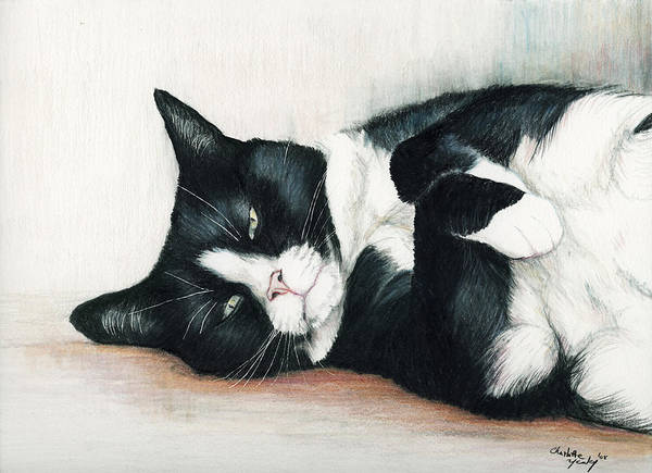 Cat Art Print featuring the drawing Relaxed Tuxedo by Charlotte Yealey
