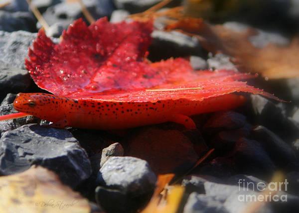 Salamander Art Print featuring the photograph Sally Mander by Debra Straub