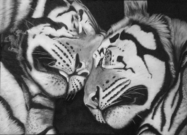 Tigers Art Print featuring the drawing Serenity by Randy McFall