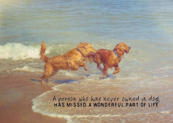 Dog Art Print featuring the photograph Sheer Joy Quote by JAMART Photography