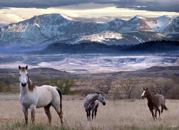 Horses Art Print featuring the digital art Snapshot by Bill Stephens