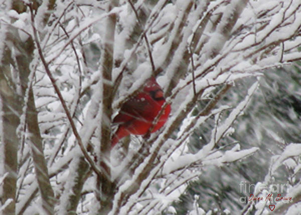 Bird Art Print featuring the photograph Snowing by Donna Brown