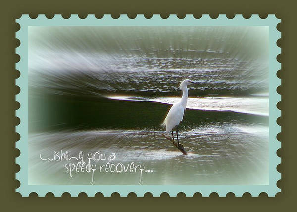 Egret Art Print featuring the photograph Speedy Recovery Greeting Card by Dottie Dees