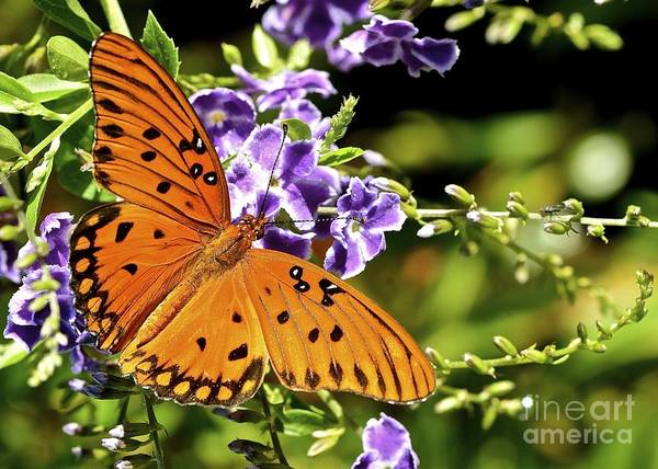 Butterfly Art Print featuring the photograph Spread Your Wings by Lisa Renee Ludlum