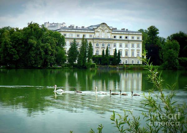 Austrian Lake Art Print featuring the photograph Swans On Austrian Lake by Carol Groenen