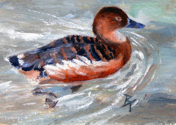 Duck Art Print featuring the painting Swimming Aceo by Brenda Thour