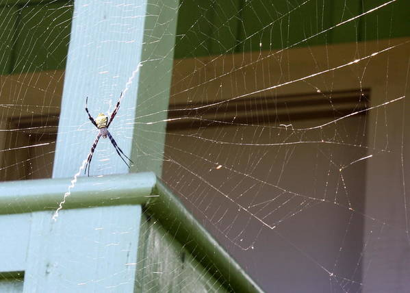 Spider Art Print featuring the photograph Tangled Web by Annie Babineau