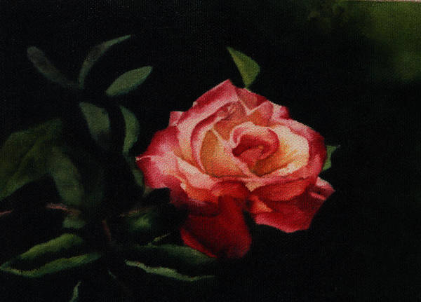 Floral Art Print featuring the painting The Rose by Patricia Halstead