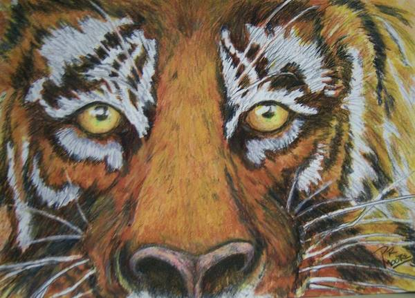 Wildlife Art Print featuring the painting Tiger Eyes by Patricia R Moore